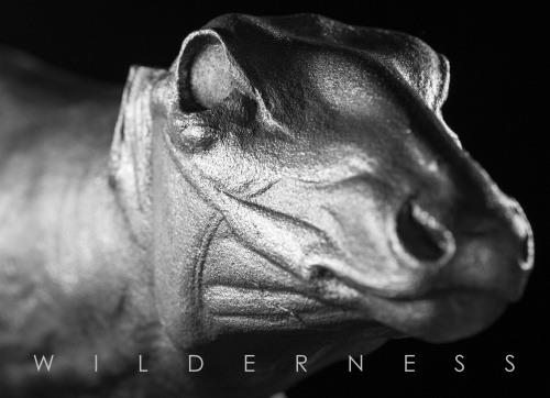 Wilderness_7x5_Front